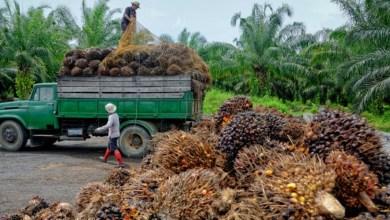 Photo of Kenderaan China Uji Biodesel Mengandungi Minyak Sawit Malaysia