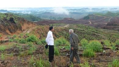 Photo of Pelabur Antarabangsa Bantu Indonesia Bangunkan Ibu Negara Baharu