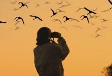 Photo of 5 Lokasi Panas Untuk Aktiviti Pemerhatian Burung di Malaysia