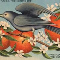 19-25 in the Orange Blossom State.