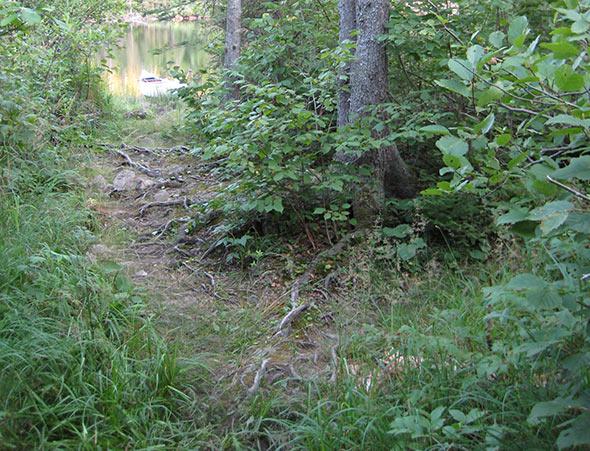 Trail into Carrot Lake
