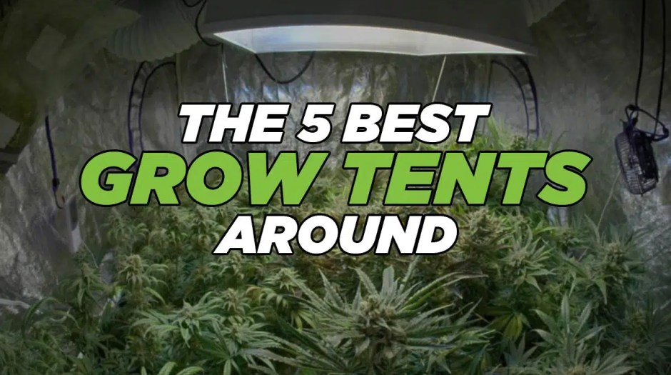 The 5 Best Grow Tents Around