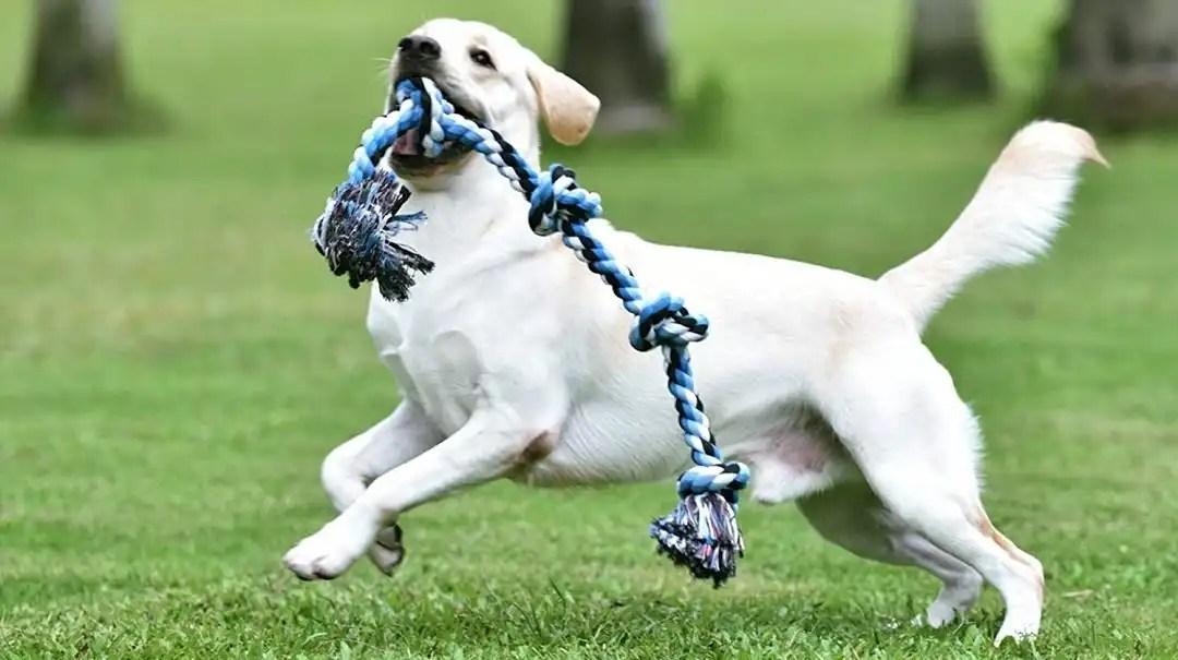 BIGGEST DOG TOYS FOR LARGE BREEDS