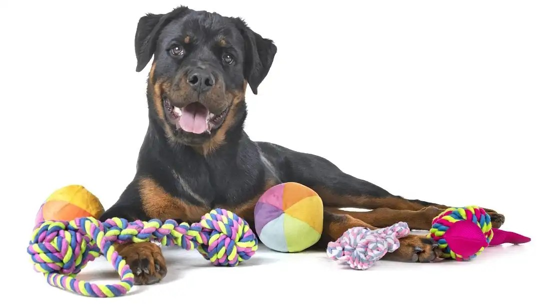 Features of a great big dog toy