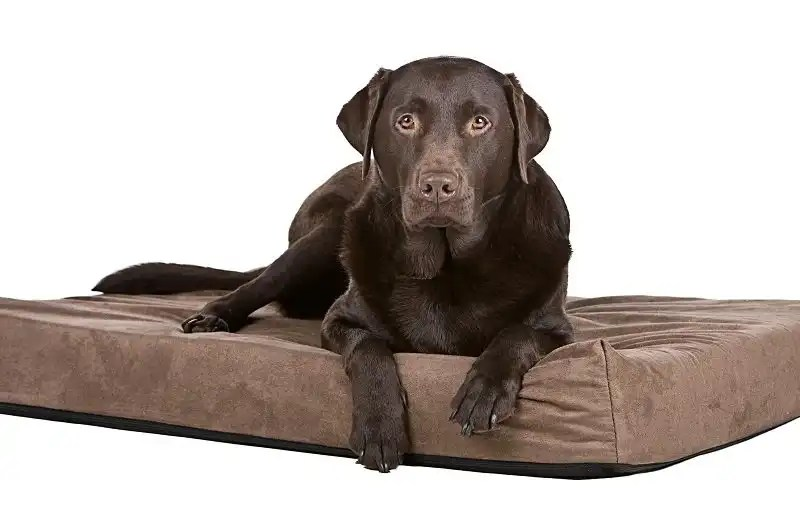 How do orthopedic dog beds work