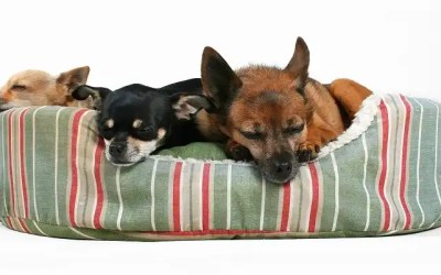 13 Best Orthopedic Dog Beds for Perfect Sleep & Rest