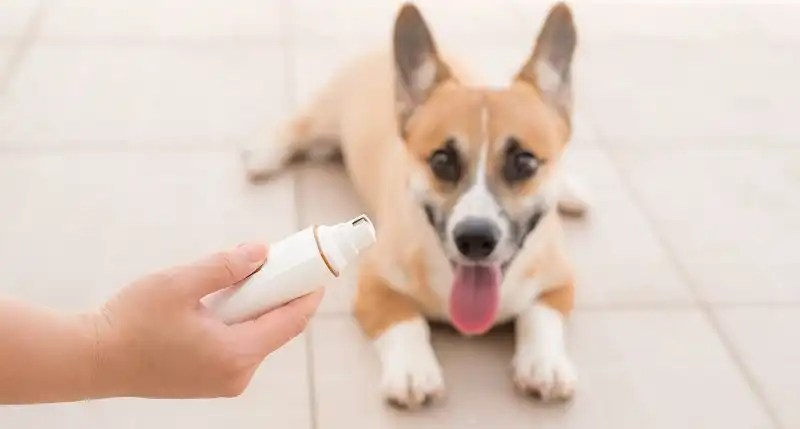Best Dog Nail Grinders For Safer & Faster Nail Trimming