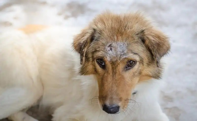 Why Some Dogs Have Dry Skin, and The Symptoms