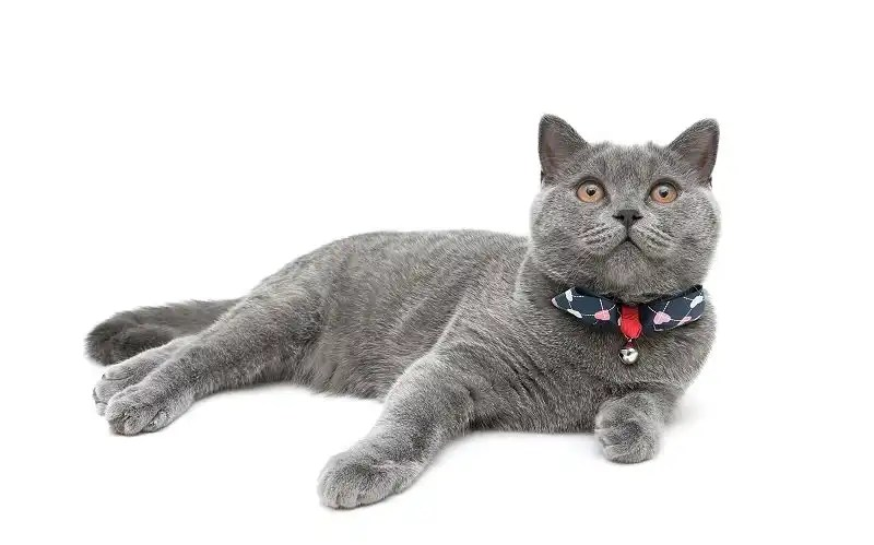 What makes a great cat collar