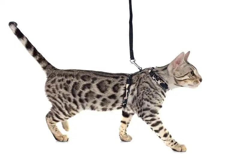 What are the benefits of using a cat harness