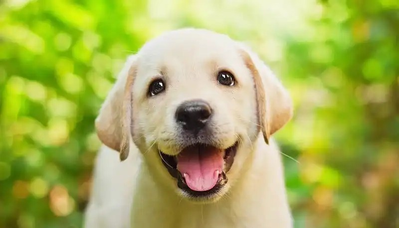 Puppies - a cuteness overload