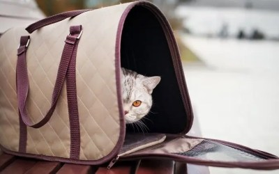 15 Best Cat Carriers For a Safe Travel Without Stress