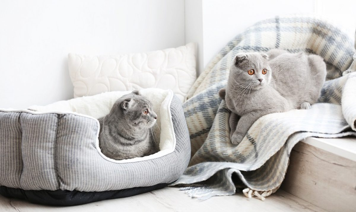 Best Heated Cat Bed Of 2020 Cozy Warm Cat S Shelter Toolsofpets