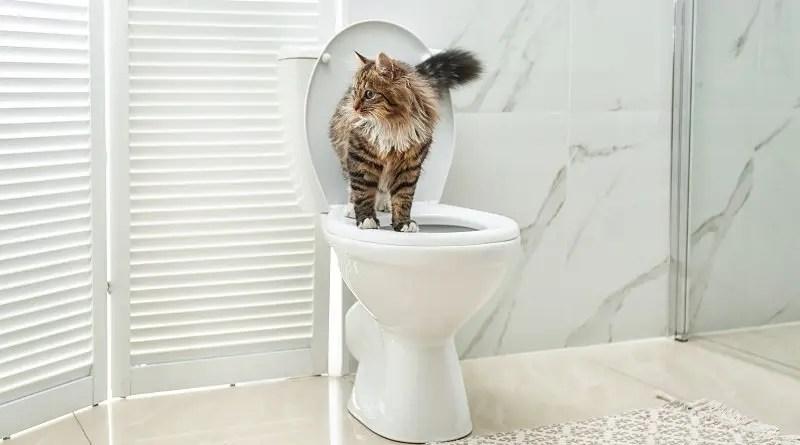 Cute cat on toilet bowl in bathroom