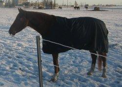 Jopega hobune