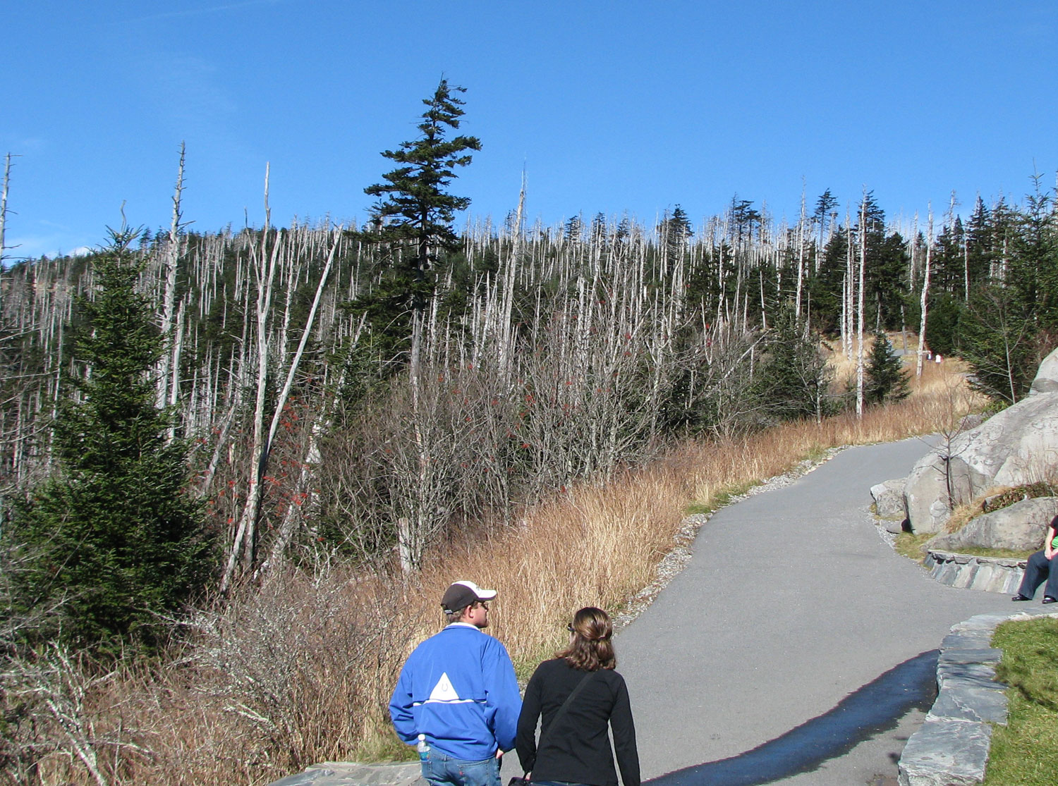 The paved path to the top of Clingman's Dome