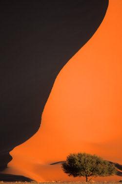Sand dune, Sossusvlei, Namibia
