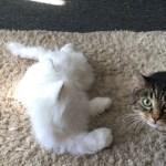cats react to robot cat