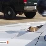 Bird sets up nest on vehicle