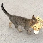 Cat and a tiger toy