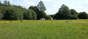 Wild Camping - Butter Cup Meadow