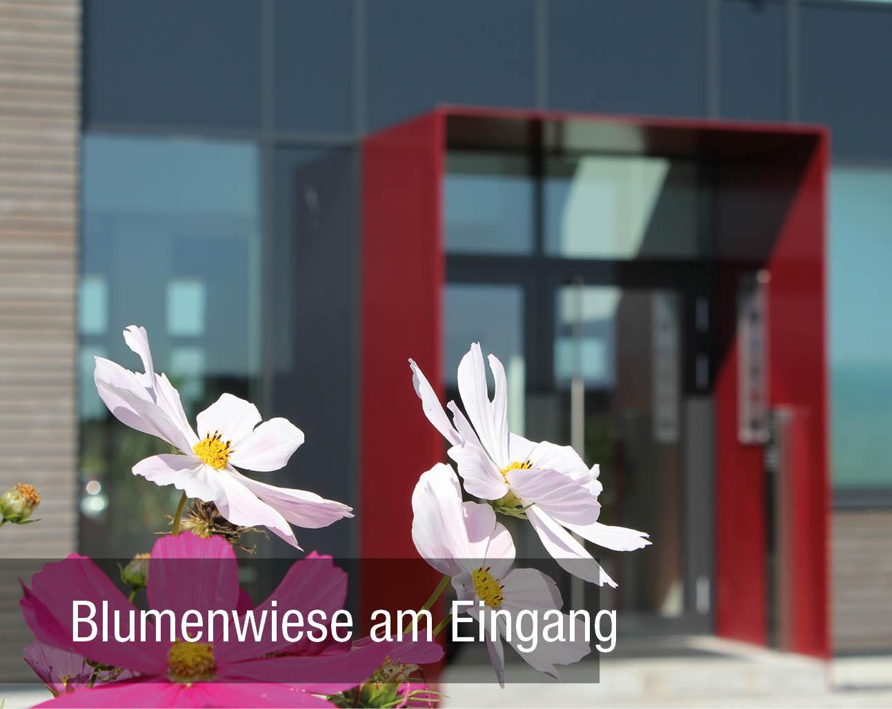 Blumenwiese am Eingang