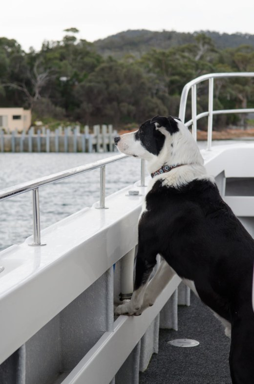 Rastus the Sea Dog