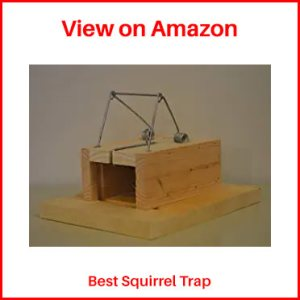 Barons-Little-Killer-Squirrel-Trap