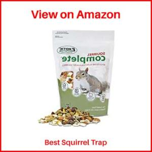Exotic-Nutrition-food-for-Squirrel-Trap