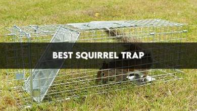 Photo of Best Squirrel Trap 2020 Amazon Review/Buyers Guide