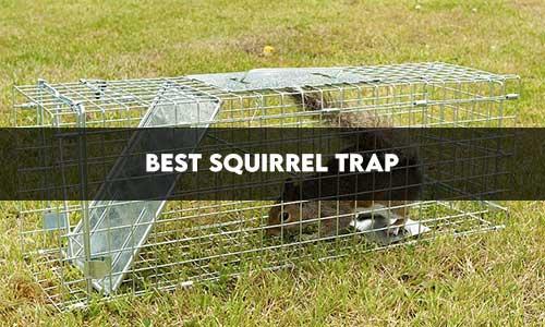 best-squirrel-traps