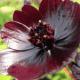 Top 10 flores mais caras do mundo