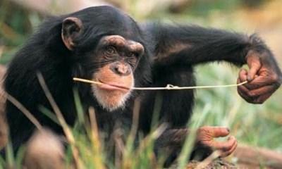 Top 10 animais mais inteligentes do planeta