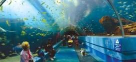 Top 10 maiores aquarios do mundo
