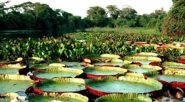 a amazonica e a maior floresta do mundo