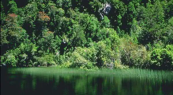 floresta temperada Valdivian