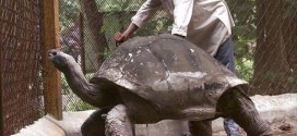 Top 10 animais de vida mais longas do mundo