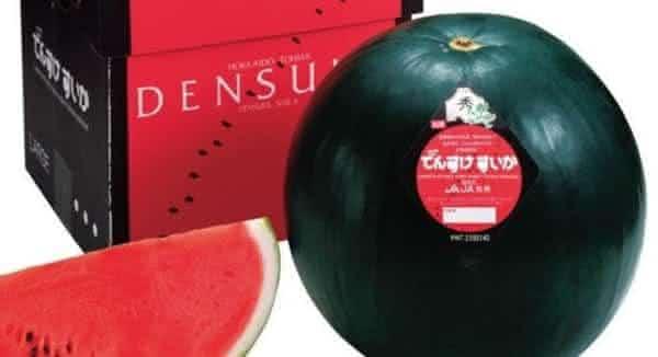 Densuke Black Watermelon melancia mais cara