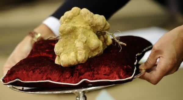 Italian White Alba Truffle comida mais cara