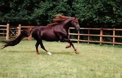 Annihilator entre os cavalos mais caros da historia