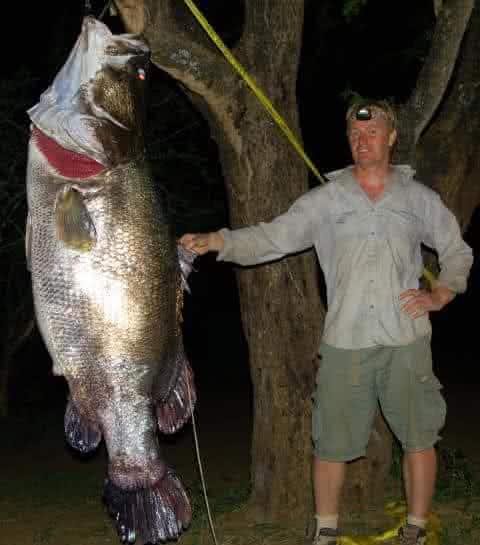 perca de nilo um dos maiores peixes de agua doce do mundo