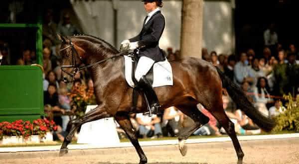 poetin I entre os melhores cavalos do mundo