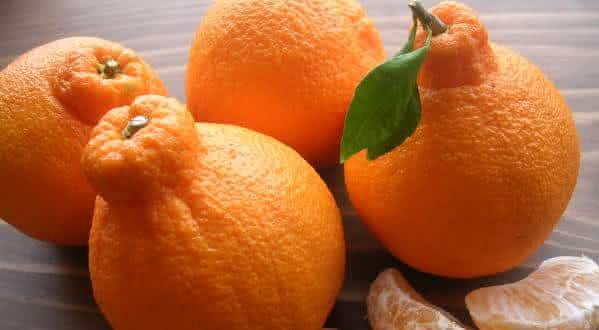 Dekopon Citrus entre as frutas mais caras do mundo