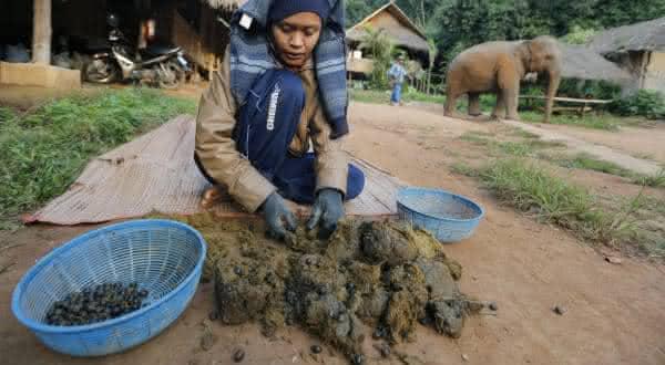 cafe black ivory entre as comidas mais bizarras do mundo