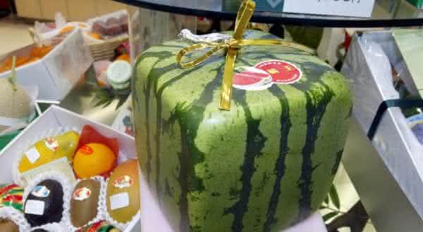 melancia quadrada entre as frutas mais caras do mundo