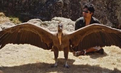 Top 10 maiores espécies de pássaros do mundo