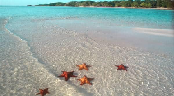 estrela do mar entre os animais mais lentos do mundo