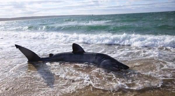 Long Beach Island entre as praias mais perigosas do mundo