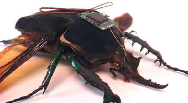 insetos hibridos entre as futurísticas armas militares