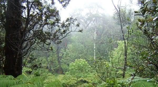 Big Bog lugares mais chuvosos do mundo